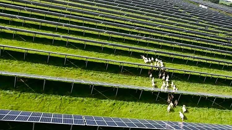 фото солнечная ферма в Дании