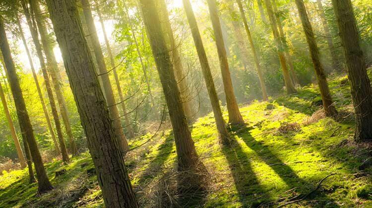 фото леса для производства электроэнергии