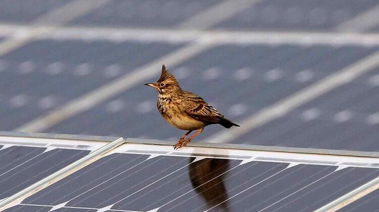 фото птицы загрязняют фотоэлементы в южной корее
